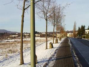 """""""7000 Eichen - Stadtverwaldung statt Stadtverwaltung"""", Joseph Beuys,  documenta 7 - documenta 8, 1982 - 1987"""